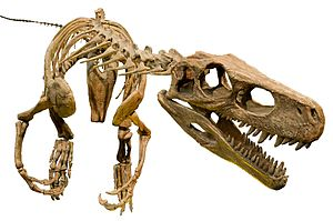 Herrerasaurus ischigualastensis White Background.jpg