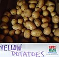 Hillview Farms yellow potatoes.jpg