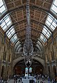 Hintze Hall Natural History Museum 2.jpg