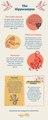 Hippocampus tattoo themed brain infographic.pdf