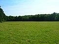 Hoadley Wood - geograph.org.uk - 512857.jpg