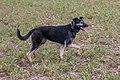 Hond «Op der Heed»-101.jpg