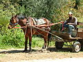 Horse and cart Beit Zayit.jpg