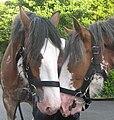 Horse whispers?.jpg