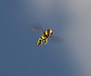 Talk:Insect flight