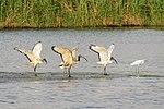 Hsiangshan wetland of Hsinchu City-yehct-014.jpg