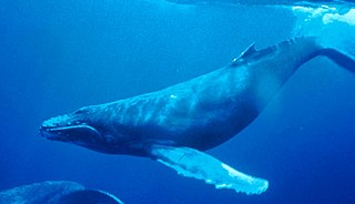 Marine mammal Mammals that rely on marine environments for feeding