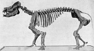 Coryphodon - Skeleton of Coryphodon