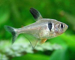 lebend fischfutter selber züchten