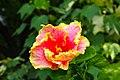 IMG 8271 Hibiscus Photographed by Peak Hora.jpg