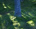 I skogen (1948604987).jpg