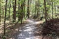 Ichetucknee Springs State Park trail to canoe launch.jpg