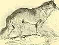 """Image from page 139 of """"The animal kingdom, arranged after its organization"""" (1849).jpg"""