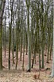 In Black Wood - geograph.org.uk - 1772464.jpg