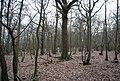 In Brown's Wood - geograph.org.uk - 1760335.jpg