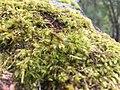 Incredible moss.jpg