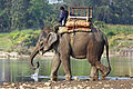 Indian-Elephant-444.jpg