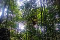 Indonesia - Bukit Lawang (26460640862).jpg