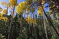 Inner Basin Trail No. 29 (30124478216).jpg