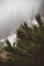 Invierno en el Pedraforca.jpg
