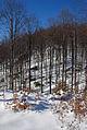 Jablanik - zapadna Srbija - Na putu sa Debelog brda ka mestu Pašna ravan 2.JPG