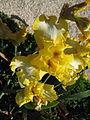 Jardin botanique Dijon 029.jpg