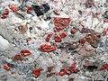 Jasper-quartz pebble conglomerate (Lorrain Formation, Paleoproterozoic, ~2.3 Ga; Ottertail Lake Northeast roadcut, near Bruce Mines, Ontario, Canada) 81 (40743254873).jpg