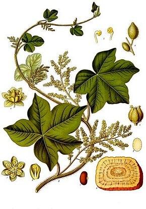 plantes médecine chinoise