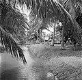 Javaanse kampong, waarschijnlijk in Nickerie, Bestanddeelnr 252-5521.jpg