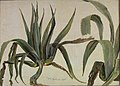 Johan Christian Dahl - Study of two Agaves - NG.M.01476 - National Museum of Art, Architecture and Design.jpg