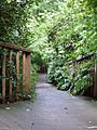 Jungle - The Lost Gardens of Heligan (9757518661).jpg