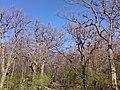 Kab-hegy - Szörnyek - Monsters - panoramio.jpg