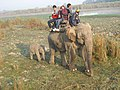 Kaziranga National Park, Assam, India 06.jpg