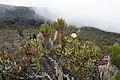 Kilimanjaro vegetation 1.jpg