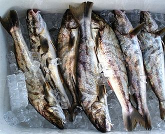 Fish processing - Ice preserves fish and extends shelf life by lowering the temperature