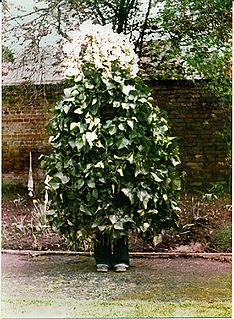 Jack in the Green folk custom in England