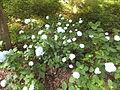 Kobe Municipal Arboretum in 2013-6-22 No,116.JPG