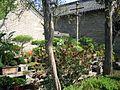 Kong mansion bonsai 2005 04 21.jpg
