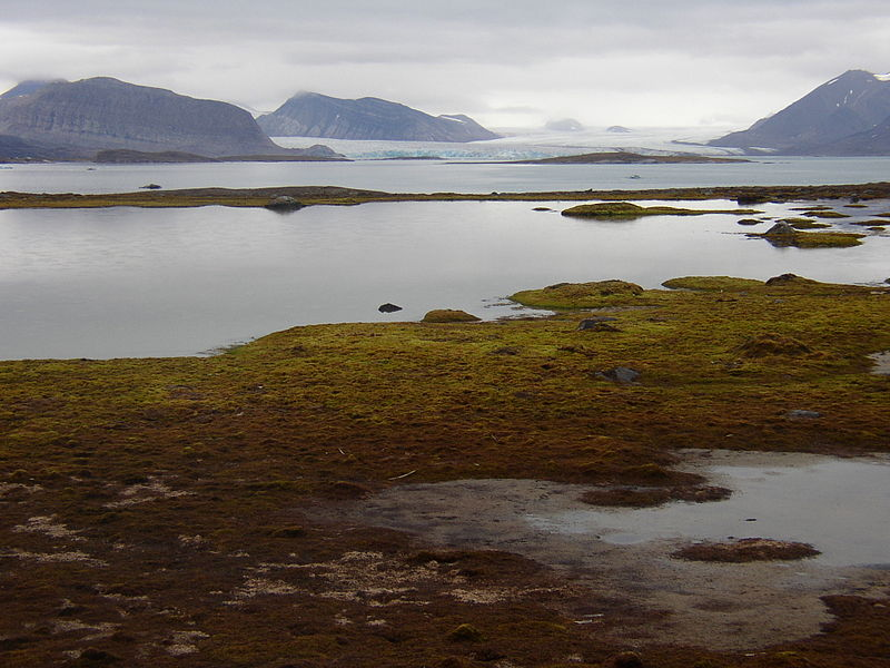 Kongsfjorden from Blomstrandhalvoja.jpg