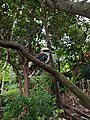 Kookaburra in Wendy's Secret Garden.jpg