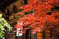 Koyasan 高野山 (Wakayama-Japan) (4950770267).jpg