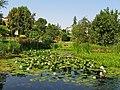 Kraków - ogród botaniczny......jpg