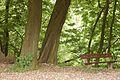 Kreis Pinneberg, Naturschutzgebiet Liether Kalkgrube 21.jpg