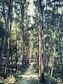 Kuakata National Park (01).jpg