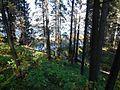 Kungursky District, Perm Krai, Russia - panoramio (197).jpg