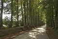 L'allée ds tilleuls reliant les châteaux de Givenchy-le-Noble et Lignereuil 04.jpg