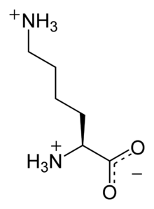 L-lysine-monocation-2D-skeletal.png