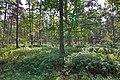 LSG Forst Rundshorn nahe Würmseeweg IMG 0159.jpg