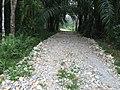 Lae Oram, Simpang Kiri, Subulussalam City, Aceh, Indonesia - panoramio (10).jpg