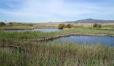 Lagunas de la Marjal del Moro.jpg